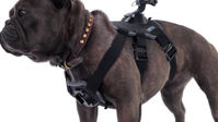 Picture of GoPro Fetch (Dog Harness)